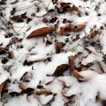 Ezek a nap fotói: beborítja a hó a Műegyetem campusát