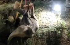 Daruval, fél nap alatt mentettek ki egy kútba esett elefántot