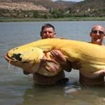 Fotó: 88 kilós albínó szörnyeteget fogtak ki egy tóból