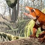 Találtak egy 130 millió (!) éves koponyát, ez bizony egy eddig nem ismert fajhoz tartozik
