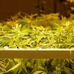 Grúziában nem lehet ezentúl büntetni a marihuánafogyasztást