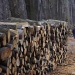 Népszabadság: milliárdok folytak el erdészetektől a Kehi szerint