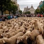 Birkák özönlötték el a madridi utcákat