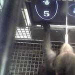 Bebizonyították: a majmok is meg tudják tanulni a matematikát