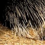 Látott már bébi sült? A Nyíregyházi Állatparkban most van egy (fotók)