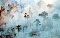 Egy indonéz férfi 700 kilométert gyalogolt hátrafelé az esőerdők megmentéséért