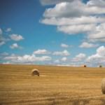 Földmutyi újratöltve? Az agrárminiszter szerint a haszonbérlők előnyt élveznek majd az állami földek árverésein