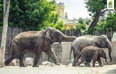 Elefánttal üzent Schobert Norbertnek a Fővárosi Állatkert