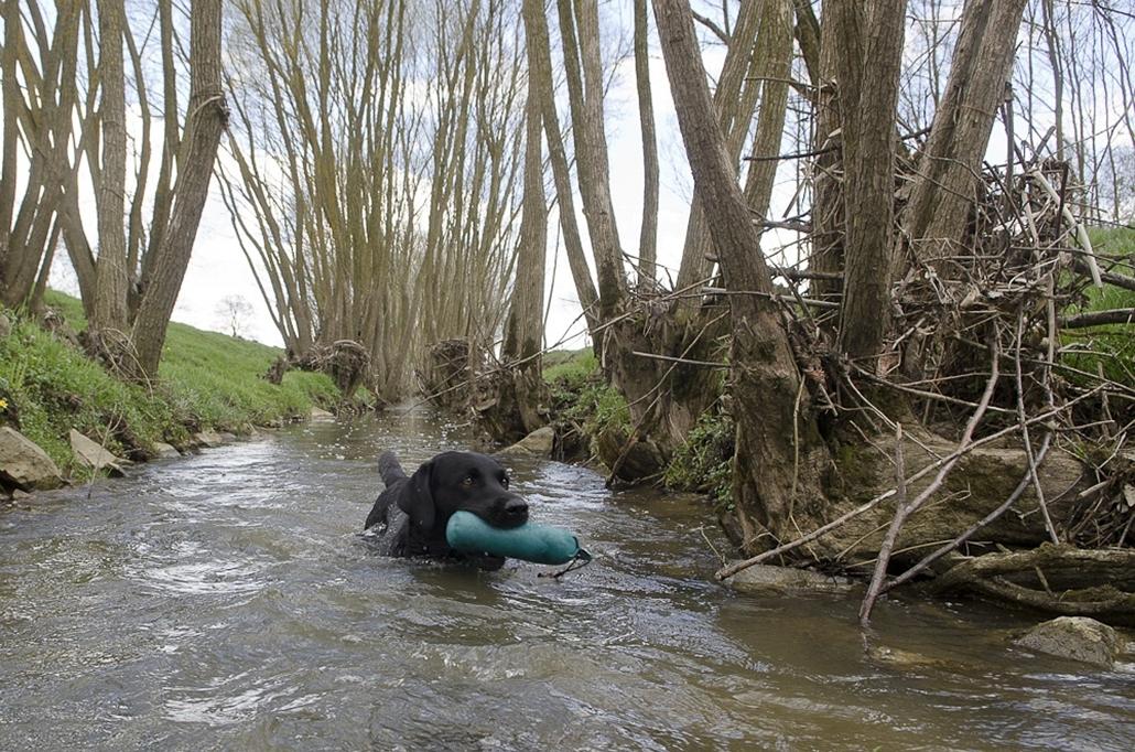 Retrieverek ugrándoznak - nagyítás, Working Test, kutya, WT-et standard dummy