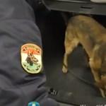 Nem voltak valami rafkósak ezek a drogcsempészek – videó