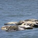 ENSZ: ha a fajok kipusztulnak, onnan már nincs visszaút
