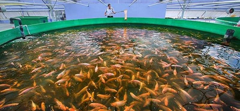 Még mindig túl sokat halászunk