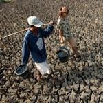 Sós víz és aszály tizedeli a vietnami rizst, rossz termés várható