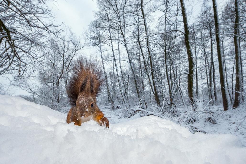 NE_! - V. Állatok és környezetük - 2. díj és a Vadon Magazin különdíja - Hóhányó - Az Év Természetfotója 2014, nagyítás