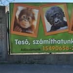 123 millió kéne az Állatkertnek a túléléshez