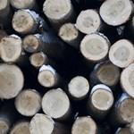 Halálos baleset lett egy szakszerűtlen favágásból Kaposváron