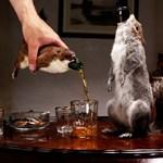Kitömött állatokba csomagolt sörök – elgurult a gyógyszer egy főzdénél