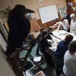 Nagy változás: űrlap készül a választási csalások bejelentésére