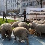 Megmagyarázták, miért kapott tanyasi támogatást a Belváros
