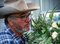Kannabiszfarmenek állt James Belushi