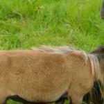 Kedves kis természetfilmet forgatott a BBC, de a juh a legérzékenyebb pontján fejelte le az operatőrt (videó)