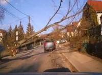 Az autók, gyalogosok közé dőlt egy fa Csömörön, miután egy teherautó eltalálta – videó