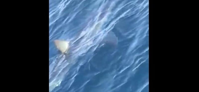 Méretes cápát videóztak a horvát tengeren