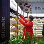 Forradalom a fűszertartóban: Nem csak a vegeta