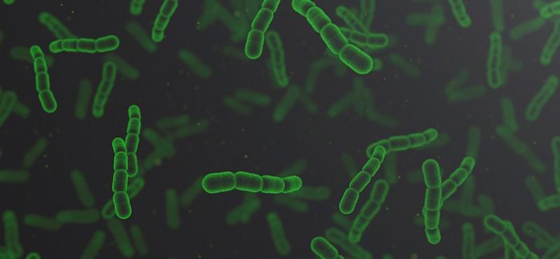 Rájöttek a kínai tudósok, hogyan lehet a vízből kivenni az antibiotikumot