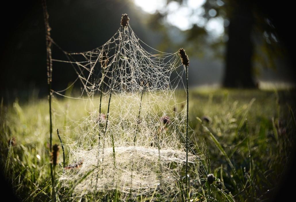 afp. pók, pókháló, nagyítás - 2013.09.05. Kassel, Németország, Blades of grass are covered with spiderwebs on September 5, 2013 in Kassel, western Germany.