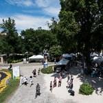 Kivágták a Nemzeti Múzeum kertjének legöregebb fáját