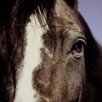 Szirénázó mentőnek vágtatott egy elszabadult ló Hajdú-Bihar megyében