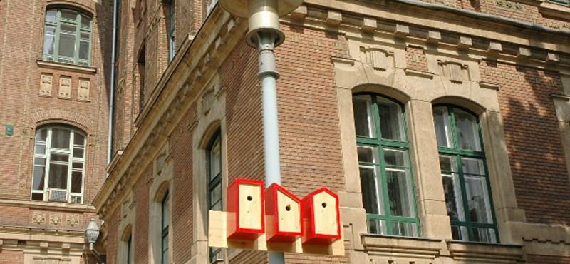 Bámulatos madárlakokat terveztek a BME építészmérnök hallgatói - képek