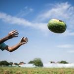 Szociális farmok jönnek létre Magyarországon