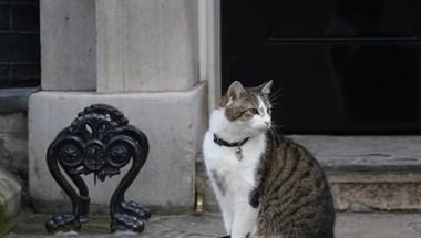 A Downing Street macskája máris bejelentkezett Theresa May utódjának