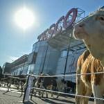 """""""A vidéknek elég"""" - gyújtó hangú beszédben üzentek a tejtermelők a vásárlóknak"""