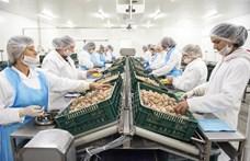 6,5 milliárd forintból épült éticsiga-feldolgozó üzem Kisvárdán
