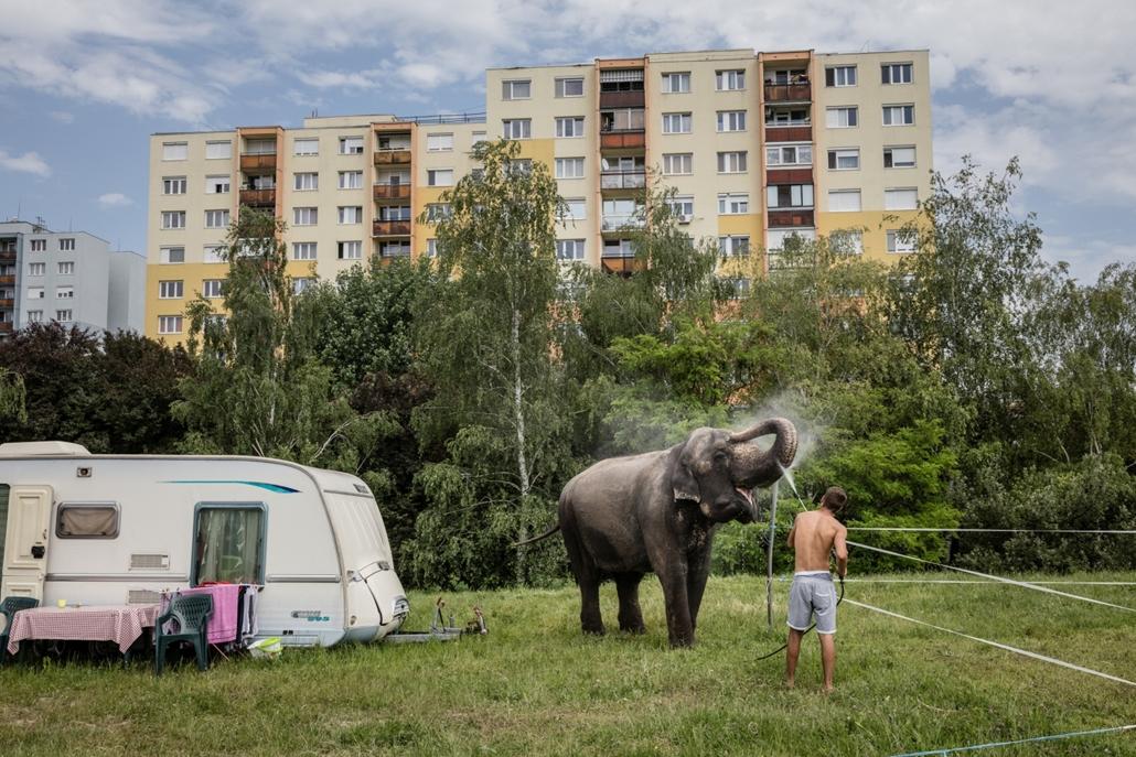 Emberábrázolás - portré (sorozat) - 1. díj: Kállai Márton (Szabad Föld): Elefántfürdő