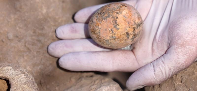 Se encontró un huevo de gallina milenario y todavía es amarillo
