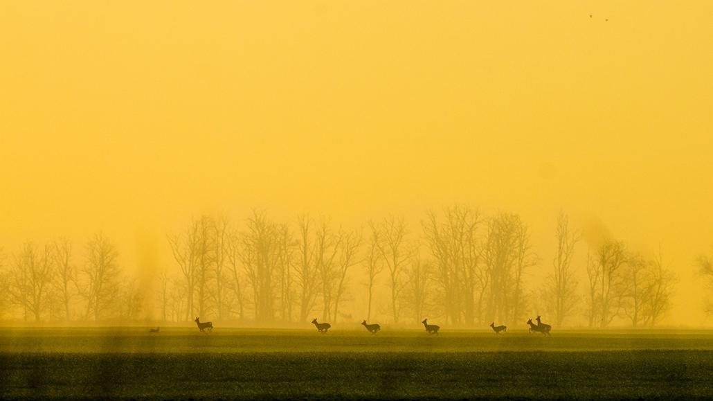 NE_! - Hajnali vágta - Az Év Természetfotója 2014, nagyítás