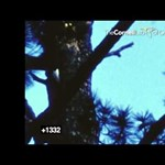 Videó: szenzációs felvételre bukkantak egy rég kihalt madárról