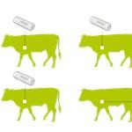 Wifin üzen a tehén az emésztéséről