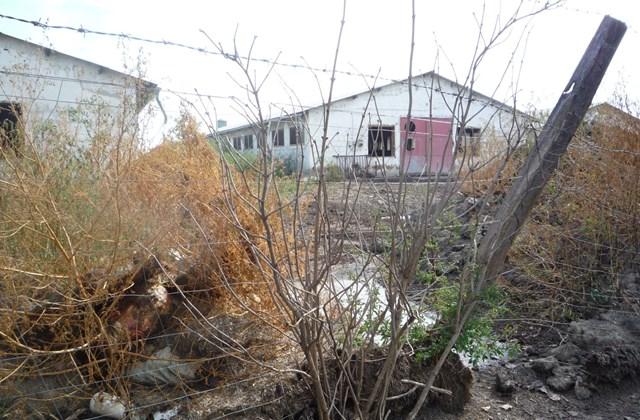 e_! - 18.09.14. Tiszaföldvár - disznóügy . tiszaföldvár, disznó, disznótelep, sertés