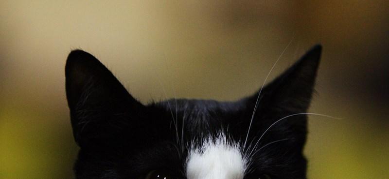 El a kezekkel a fekete macskáktól!