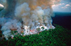 Nem csak az erdőtüzeket, most már Bolsonarót is meg akarják állítani