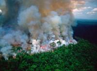 Ferenc pápa is megszólalt az amazóniai erdőtüzek miatt