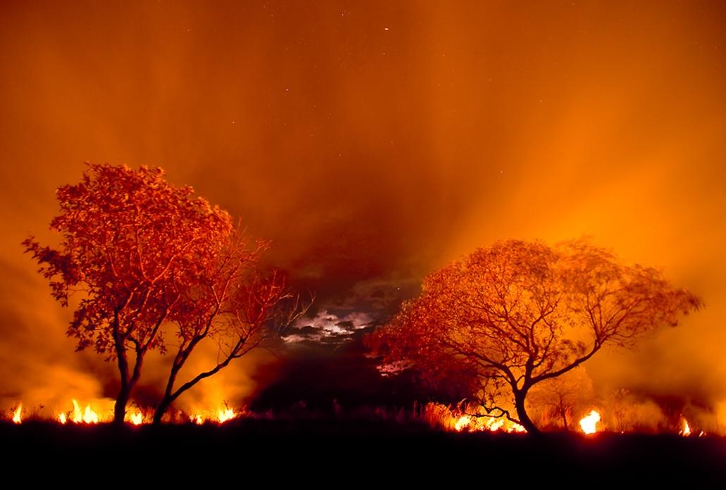Az év természetfotósa 2010 pályázathoz nagyítás
