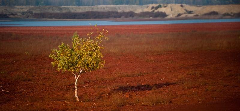 Greenpeace: Engedély nélkül kezel veszélyes hulladékot a TKV