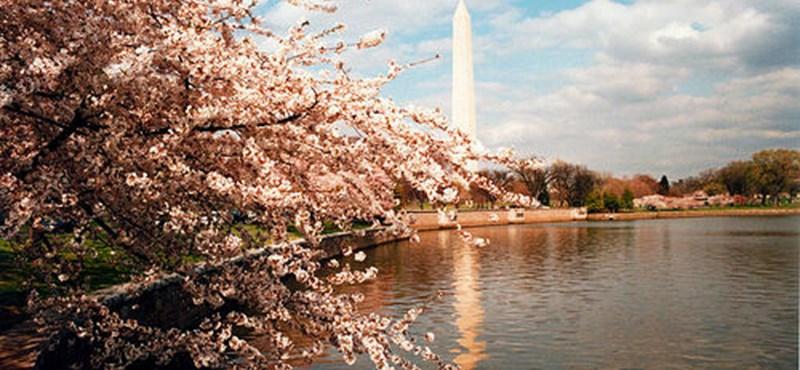 Hét csodás látnivaló Washingtonban
