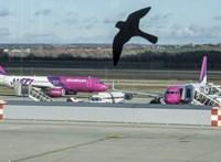 Végtelen a légitársaságok fantáziája, ha extra szolgáltatásokért kell pénzt kérni